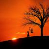 ときめきなメモリアルは伝説の木の下に埋めろ(違)「人生がときめく片づけの魔法」